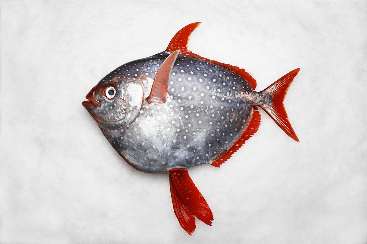 Fishermen Catch 3 Extremely Rare Orange Opah Fish Same Day ... Malaysian Women Culture