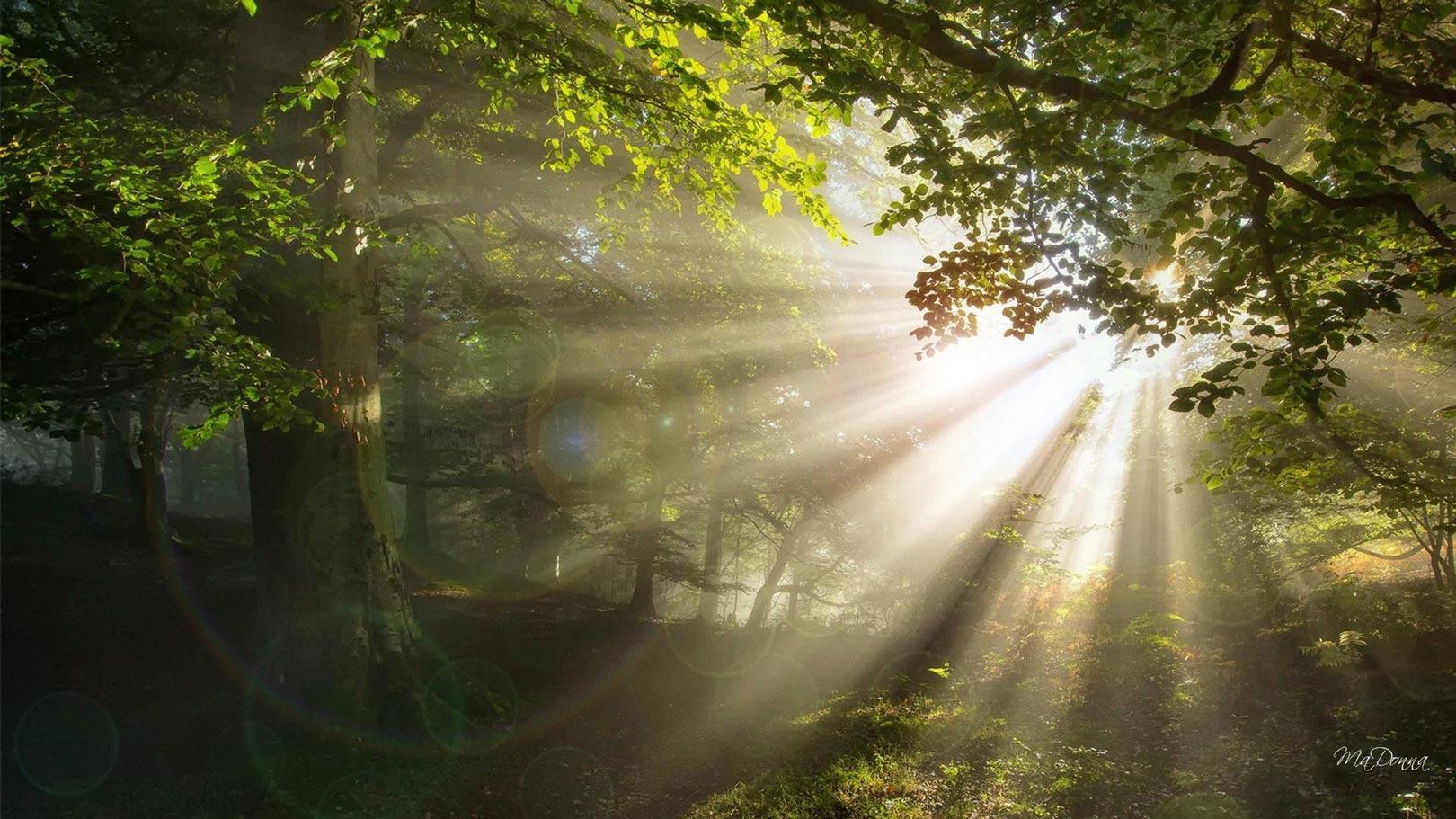 пробивающиеся лучи солнца в лесу без смс