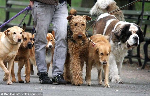 Dog Walker Salary Toronto